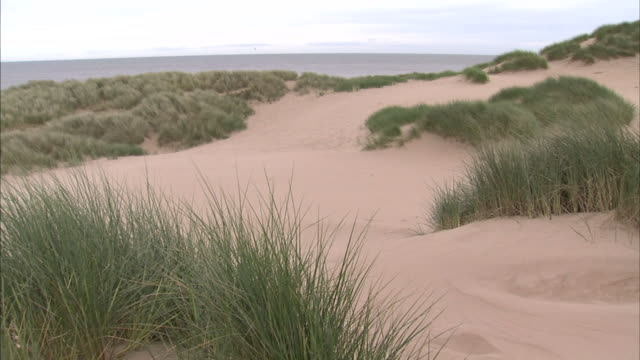 hd ws sand dunes w/ marram grass moving in wind fg pan dunes w/ north sea bg no people sites of special scientific interest protected scottish... - marram grass stock videos and b-roll footage