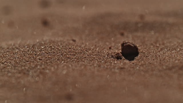 sand dunes wind slow motion macro - sandig stock-videos und b-roll-filmmaterial