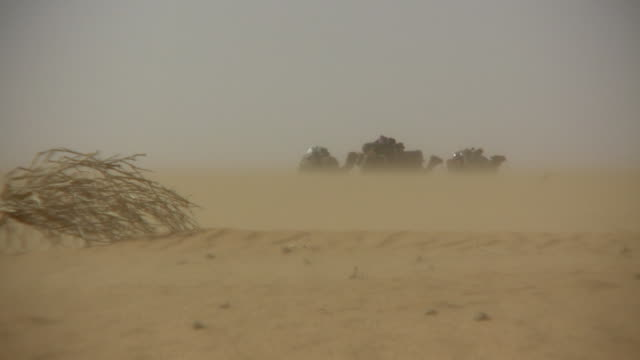 ws sand storm with camels in background / chinghetti, adrar, mauritania - mauritania stock videos & royalty-free footage