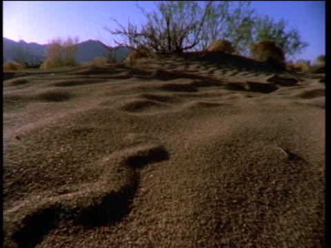 sand swimmer skink slithers along under desert sands, leaving pattern in sand as it goes - sandig stock-videos und b-roll-filmmaterial
