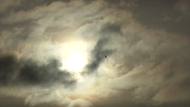 a sandhill crane flies in a gray-streaked sky. - sandhill crane stock videos & royalty-free footage