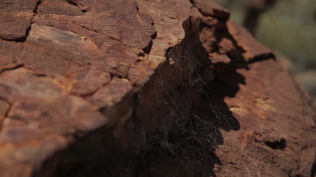 vídeos de stock, filmes e b-roll de sandstone and spider webs, king's canyon park, nt - cliff