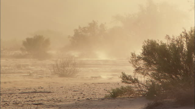 ws sandstorm in namibia desert, namibia - sandstorm stock videos & royalty-free footage