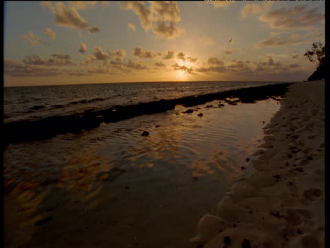 sandy beach at sunset, heron island - oceano pacifico del sud video stock e b–roll