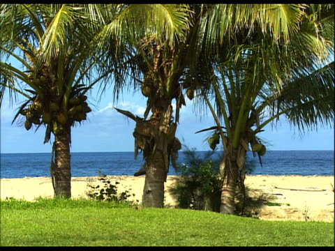 stockvideo's en b-roll-footage met sandy beach with palm trees and green grass in forefront - kleine groep dingen