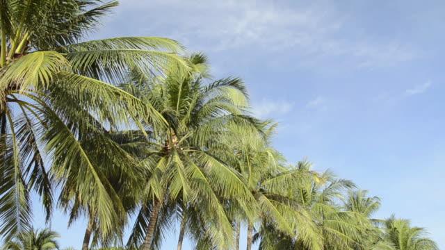 ms td sandy mae nam beach with palmtrees near ko samui island / mae nam, ko samui, thailand  - insel ko samui stock-videos und b-roll-filmmaterial