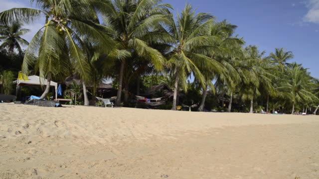 ms pan sandy mae nam beach with palmtrees near ko samui island / mae nam, ko samui, thailand  - insel ko samui stock-videos und b-roll-filmmaterial