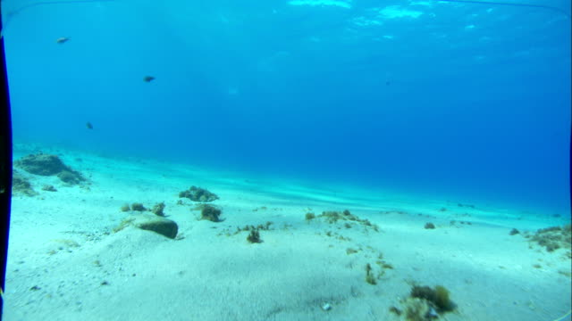 A sandy ocean floor is peppered with vegetation and rocks. Available in HD.