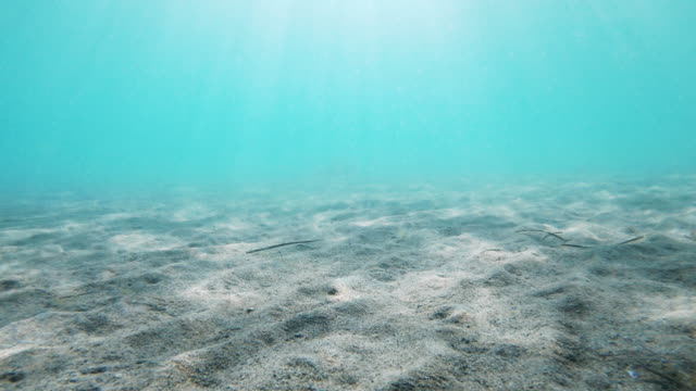 sandy ocean floor with sunbeams coming through water - seabed stock videos & royalty-free footage