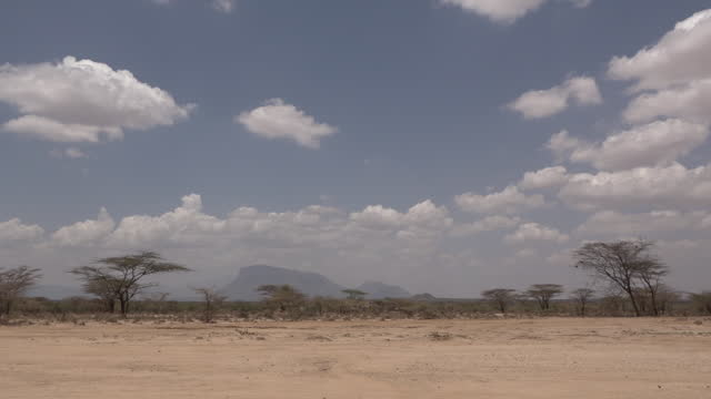 sandy plains with acacia trees against the view on the mountains in wamba, kenya on july 13, 2019. - tropical tree stock videos & royalty-free footage