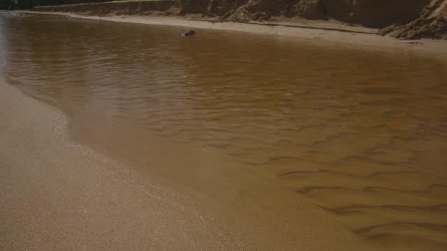 vídeos de stock, filmes e b-roll de sandy river - padrão natural