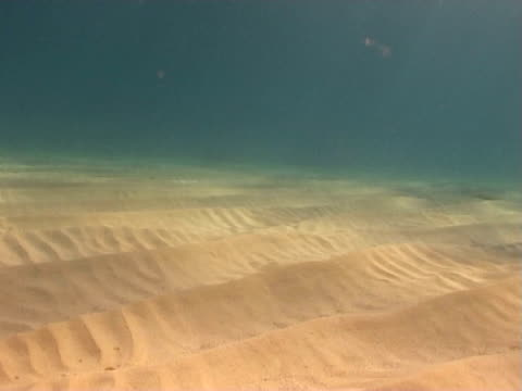 vidéos et rushes de sandy seabed - océan atlantique