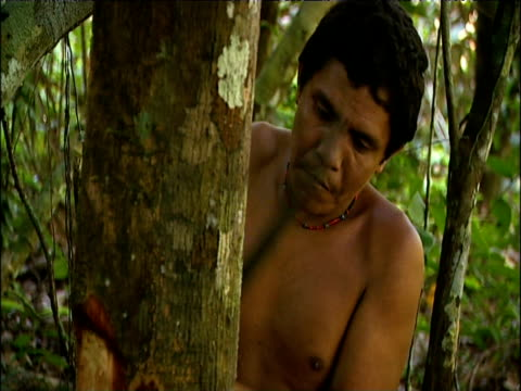 stockvideo's en b-roll-footage met sanema tribesman chops bark from vinola tree with machete to extract sap for use as sakona hallucinogenic snuff southern venezuelan rainforest - hars