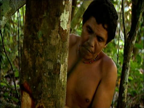 sanema tribesman chops bark from vinola tree with machete to extract sap for use as sakona hallucinogenic snuff southern venezuelan rainforest - snuff stock-videos und b-roll-filmmaterial