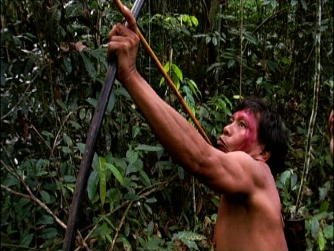 Sanema tribesman fires arrow during hunt South Venezuelan Rainforest