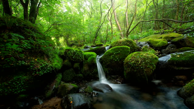 sangdong moss valley / yeongwol, gangwon-do, south korea - 巨礫点の映像素材/bロール