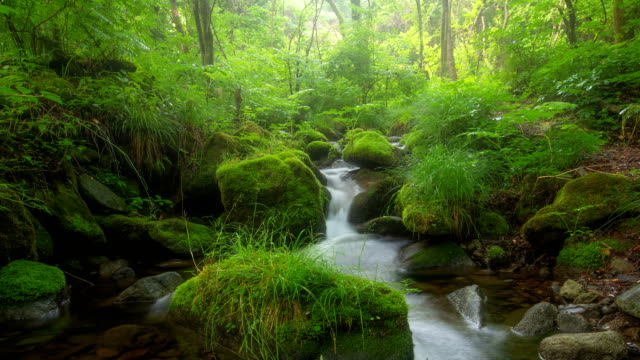 sangdong moss valley / yeongwol, gangwon-do, south korea - moss stock videos & royalty-free footage