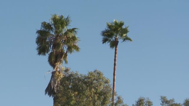 ktla santa ana winds strike ventura county - ventura stock videos and b-roll footage