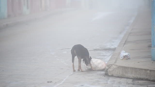 santa clara city has lost ground in the hygiene field / economic hardship makes inhabitants to dispose garbage in plastic bags / strays dog feed from... - garbage disposal stock videos and b-roll footage