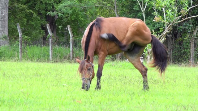 santa clara, cuba, horse scratching in a farm - animal body part stock videos & royalty-free footage