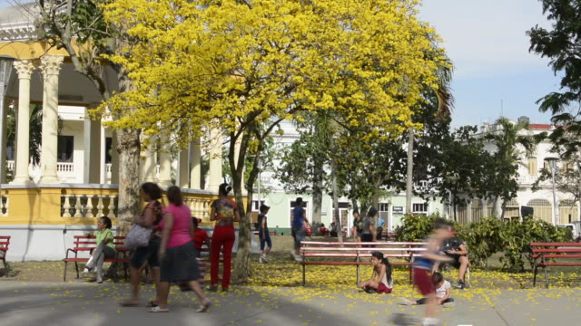 santa clara cuba main square with locals and colorful trees and gazebo in central downtown - gazebo stock videos & royalty-free footage