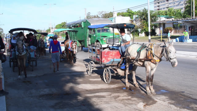 vídeos de stock e filmes b-roll de santa clara, villa clara, cuba-march 10, 2020: passenger transportation using horsedrawn carts. these are lining up in the sandino terminal. the... - animal de trabalho