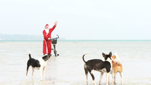 santa claus on the beach - blue dog stock videos & royalty-free footage
