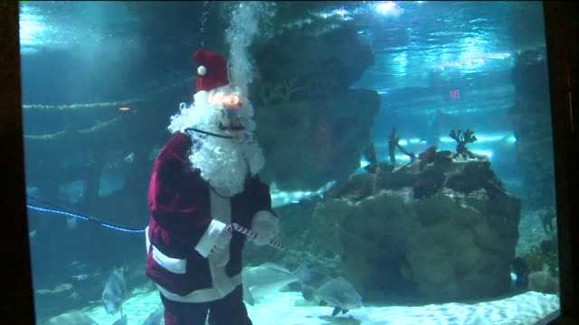 santa claus scuba diving at the greater cleveland aquarium on december 10, 2015. - 10 seconds or greater点の映像素材/bロール
