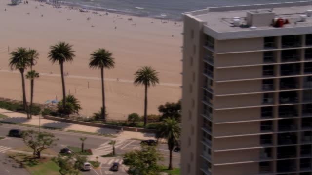 aerial santa monica beach, santa monica, california, usa - fan palm tree stock videos & royalty-free footage