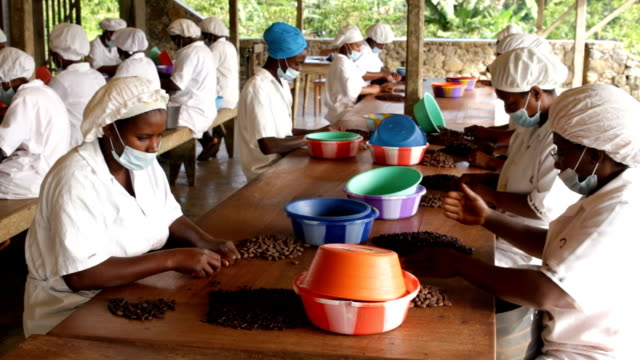 Sao Tomé and Principe, Sao Tomé island, chocolate production, breaking of toasted seeds and cocoa extraction at the chocolate company of Claudio Corallo