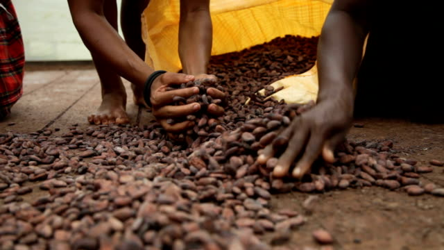 sao tomé and principe, sao tomé island, cocoa production, bagging of dried seeds - sack stock videos & royalty-free footage