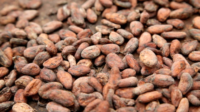 Sao Tomé and Principe, Sao Tomé island, cocoa production, seed drying phase