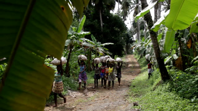 Sao Tomé and Principe, Sao Tomé island, Porto Alegre, women coming out of a plantation with a bag on their heads