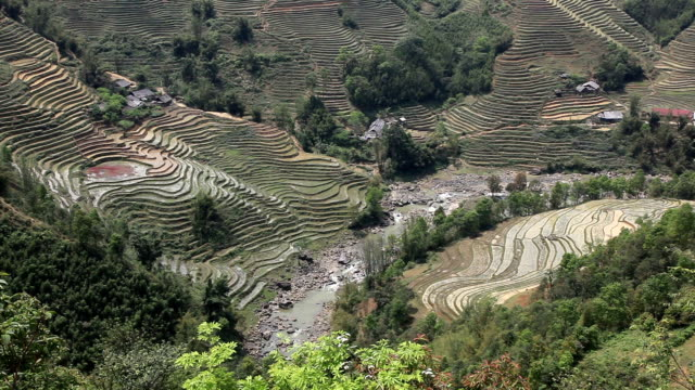sapa rice terraces nature and landscape, vietnam - sa pa stock videos and b-roll footage