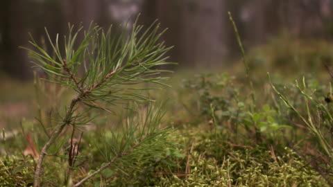 sapling sweden. - moos stock-videos und b-roll-filmmaterial