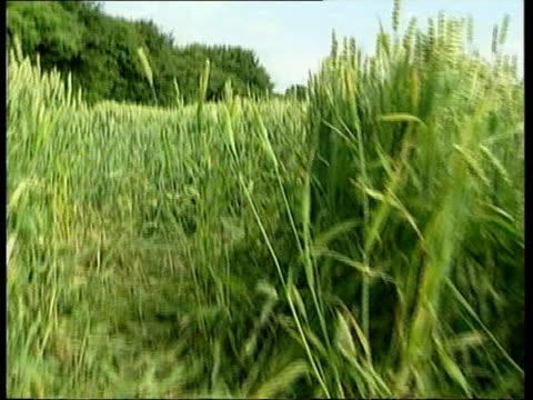 roy whiting charged lib mat held bureau near littlehampton cornfield from where sarah payne was abducted track littlehampton sara and michael payne... - kommode stock-videos und b-roll-filmmaterial