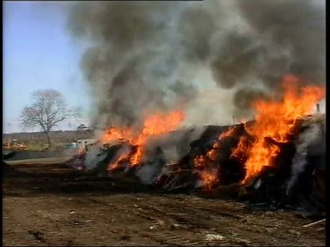 calls for emergency powers to stop spread; lib cumbria: gvs burning cattle pyre during foot and mouth disease outbreak - 重症急性呼吸器症候群点の映像素材/bロール