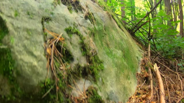 sarsen stones in west wood in wiltshire that were the origin for the vertical stones used to make stonehenge - creation stock videos & royalty-free footage