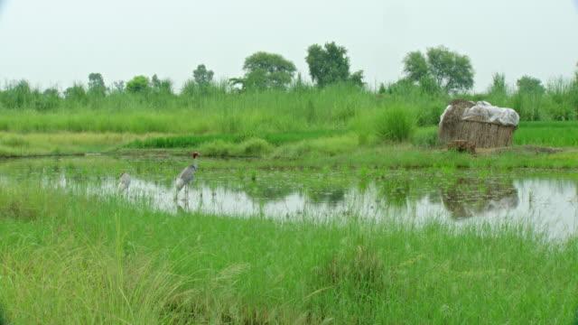 sarus crane bird - high speed photography stock videos & royalty-free footage