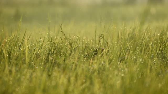 sarus crane(grus antigone) - animal neck stock videos & royalty-free footage