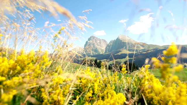 saslong massif between yellow flowers: the dolomites - langkofel stock videos & royalty-free footage