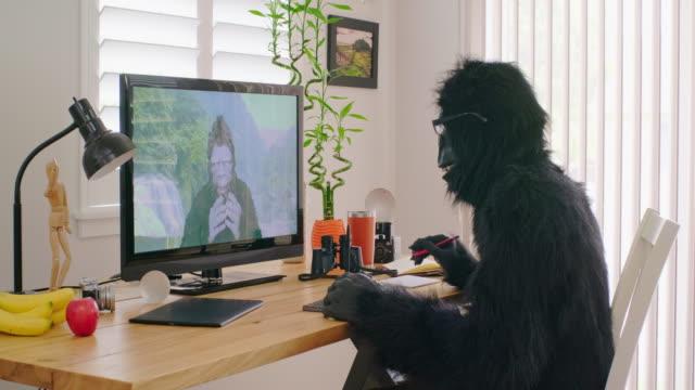 sasquatch and gorilla online videoconference - bigfoot video stock e b–roll