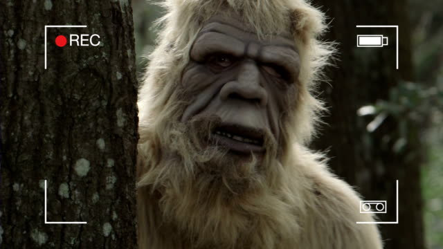 sasquatch - fantasiewelt stock-videos und b-roll-filmmaterial