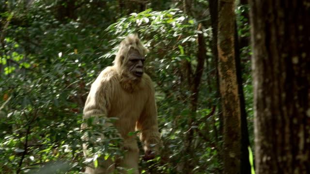 sasquatch - bigfoot video stock e b–roll