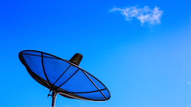 vídeos y material grabado en eventos de stock de antena de televisión vía satélite con cielo azul - antena parte del cuerpo animal