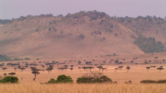 WS, Savanna landscape, Masai Mara, Kenya