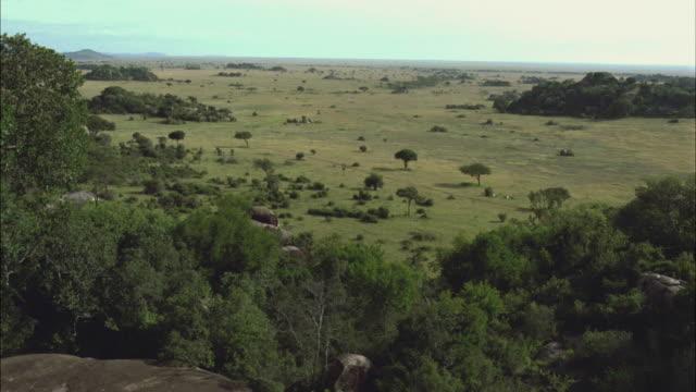 LOW AERIAL, PAN, savannah dotted with trees, Serengeti National Park, Tanzania