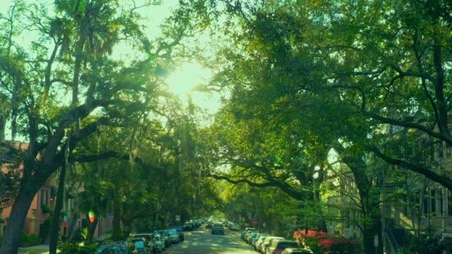 savannah, ga: spanish moss covered trees. - savannah georgia stock videos & royalty-free footage