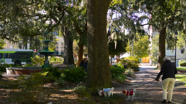 Savannah Georgia downtown woman walking dogs in Layfayette Square with quiet park and trees