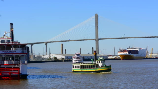 vídeos de stock, filmes e b-roll de savannah georgia riverboat ride and the talmadge memorial bridge with tourist boat on the savannah river boat on river - grupo médio de animais